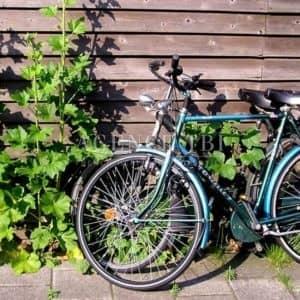 Touraine balade à vélo